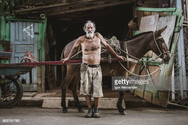 wagon horse worker, brazil - brazilian men stock photos and pictures