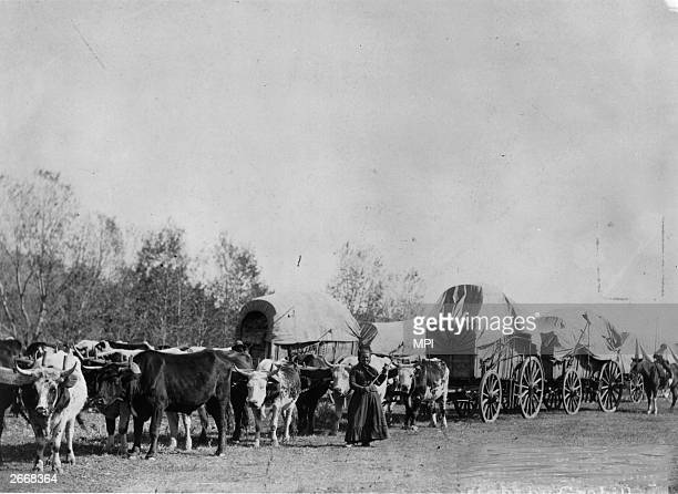 A wagon train bearing goods to the new settlements makes its way westwards before the implementation of railroads A woman walks alongside the oxen...