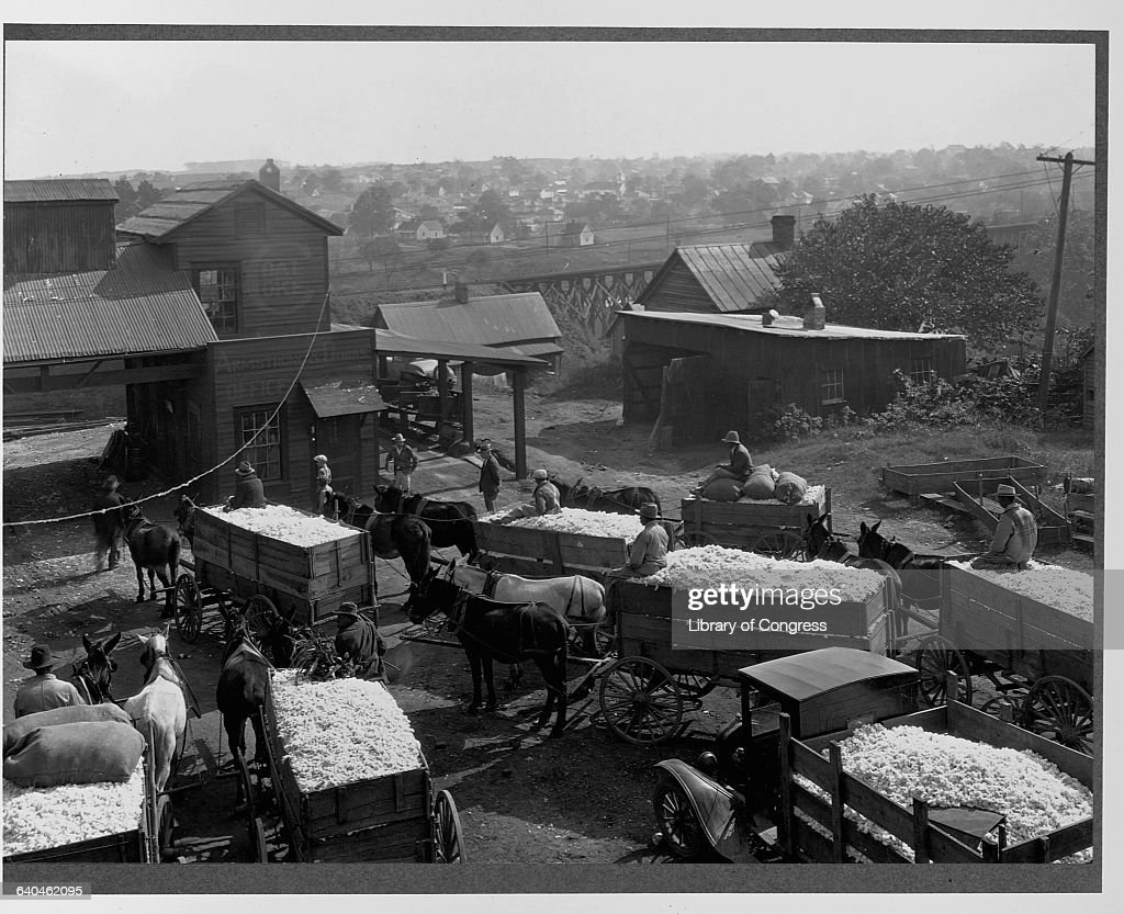 Farmers Bringing Cotton to a Gin : News Photo