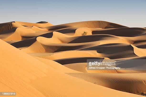 wahiba desert - oman fotografías e imágenes de stock