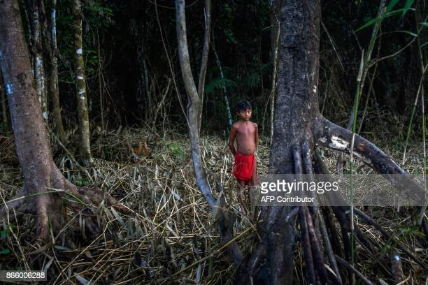 Waiapi boy stands in the jungles while looking for wood for a fire pit at the Manilha village in the Waiapi indigenous reserve in Amapa state in...