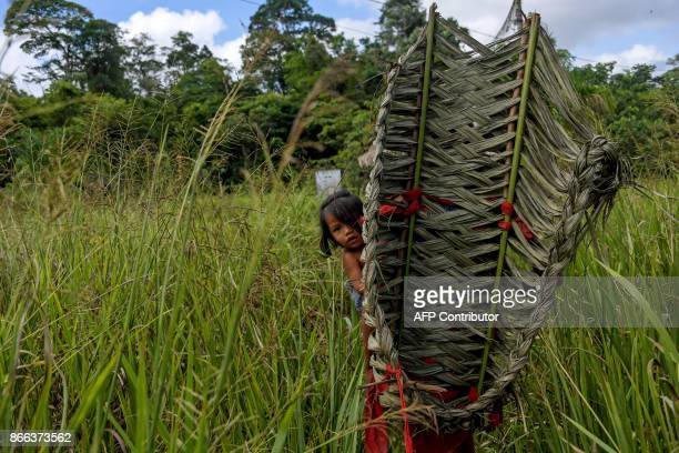A Waiapi girl is seen with her mother at a manioc's field while harvesting to prepare Caxiri a craft beer made with Manioc imbibed daily by men women...