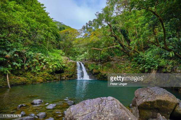 waikamoi waterfall,road to hana,maui,hawaii,usa - hannah brooks stock pictures, royalty-free photos & images