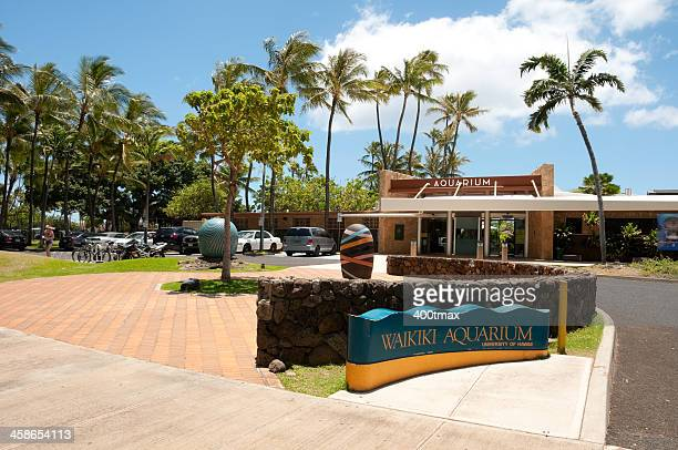 waikiki aquarium - waikiki stock pictures, royalty-free photos & images