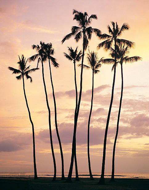 Waikiki Beach, Oahu, Hawaiian Islands