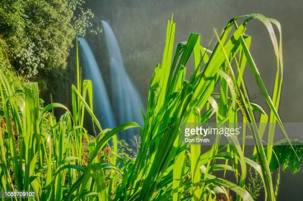wailua falls, kauai - don smith stockfoto's en -beelden