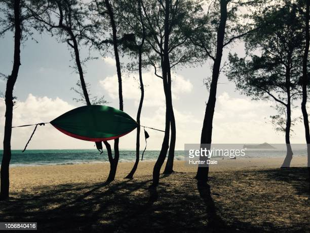 waimea bay beach park, haleiwa, hi - waimea bay - fotografias e filmes do acervo