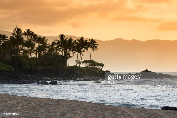 waimea bay beach park oahu hawaii - waimea bay hawaii stock photos and pictures