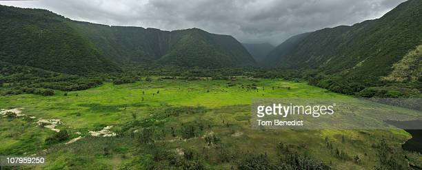waipio valley - far side - waipio valley stockfoto's en -beelden