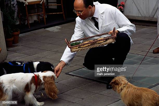 A waiter feeds gourmet treats to dogs at a penthouse party to benefit the Humane Society of New York