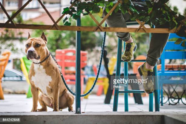 wachten voor mijn mens, terwijl het drinken van koffie - one animal stockfoto's en -beelden