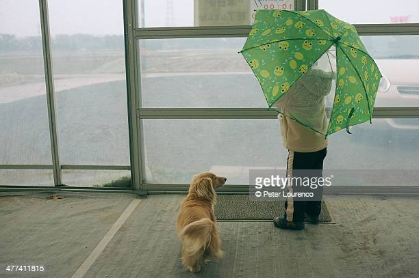 waiting for the rain - peter lourenco stock pictures, royalty-free photos & images