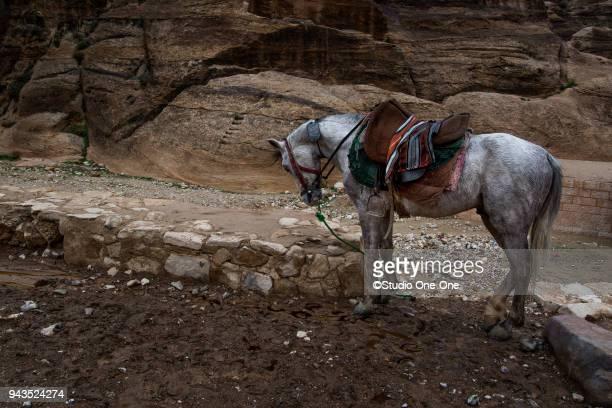 Waiting horse