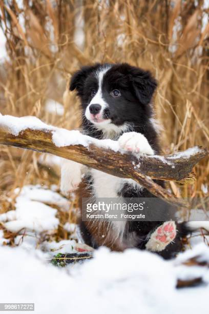 Waiting of Winter 2016