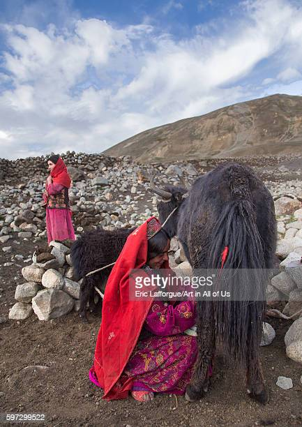 Wakhi nomad women milking yaks big pamir wakhan Afghanistan on August 11 2016 in Wakhan Afghanistan