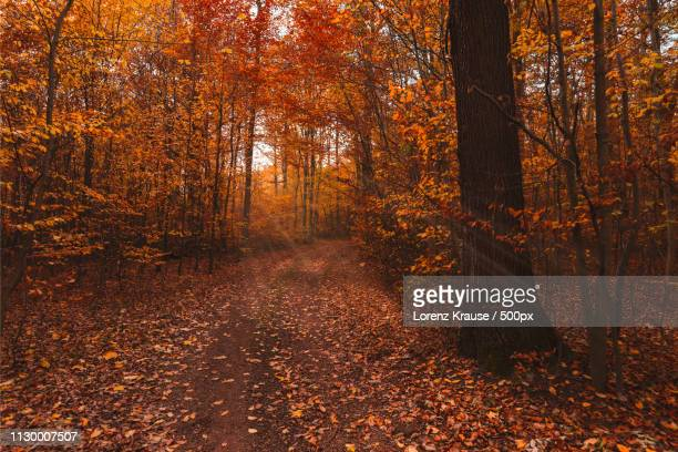 wald herbst - wald stock pictures, royalty-free photos & images