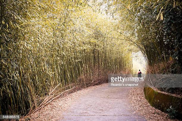 Wald in the bamboo