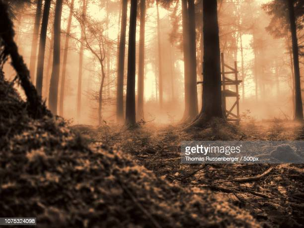 wald - wald stock pictures, royalty-free photos & images