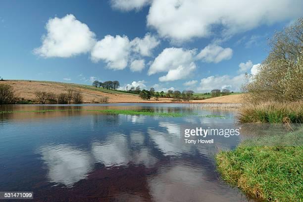 Waldegrave Pool, Priddy