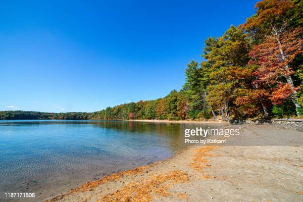 walden pond, concord, ma - walden pond stock pictures, royalty-free photos & images