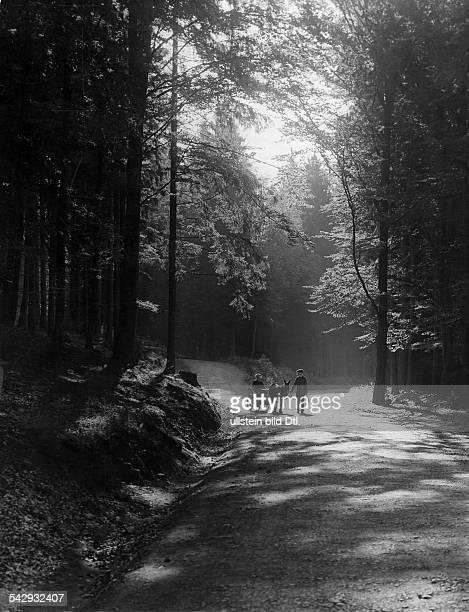 Waldpartie mit Eselsfuhrwerk bei Bad Harzburg, Deutsches Reich, Herzogtum Braunschweig - undatiert