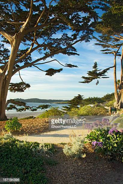 walk by the sea carmel california - monterrey stock pictures, royalty-free photos & images