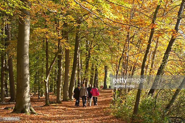 walk in an autumnal forest, lueneburg, lower saxony, germany, europe - lüneburg stock photos and pictures