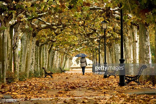walk in fall - castellon de la plana stock photos and pictures