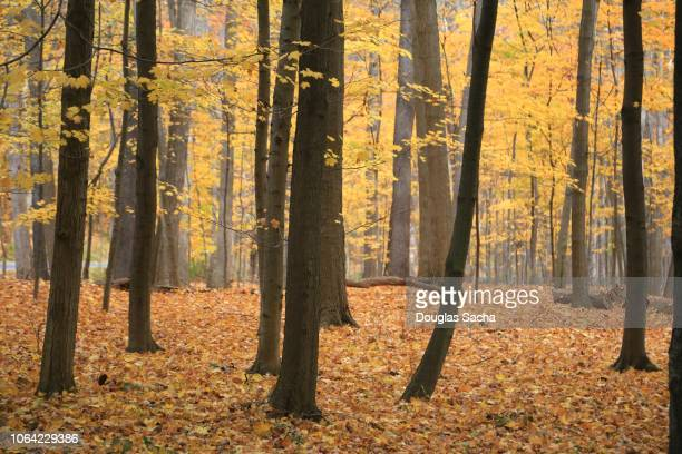 walk in the forest, autumn season - november background stock photos and pictures