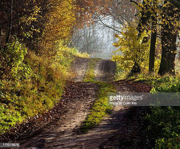 walk in the light of fall - collin key stock-fotos und bilder