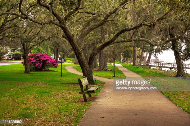 a walk in the park - gulf coast states stock pictures, royalty-free photos & images