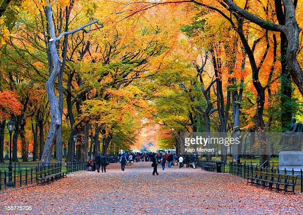 walk in the park - central park stock pictures, royalty-free photos & images