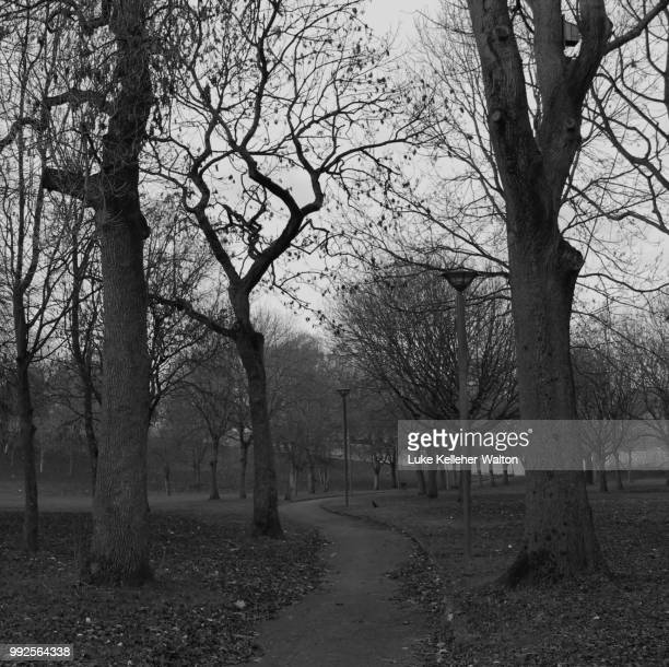 a walk in the park - bare tree stock pictures, royalty-free photos & images