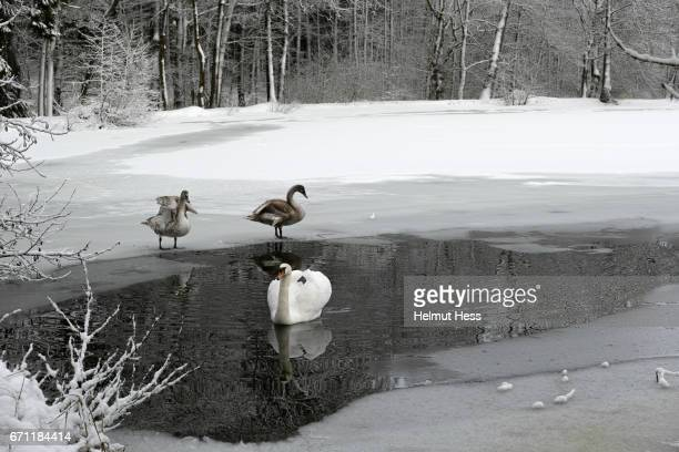 a walk in the wintry woods - baum stock pictures, royalty-free photos & images