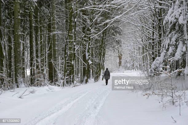 a walk in the wintry woods - weg fotografías e imágenes de stock