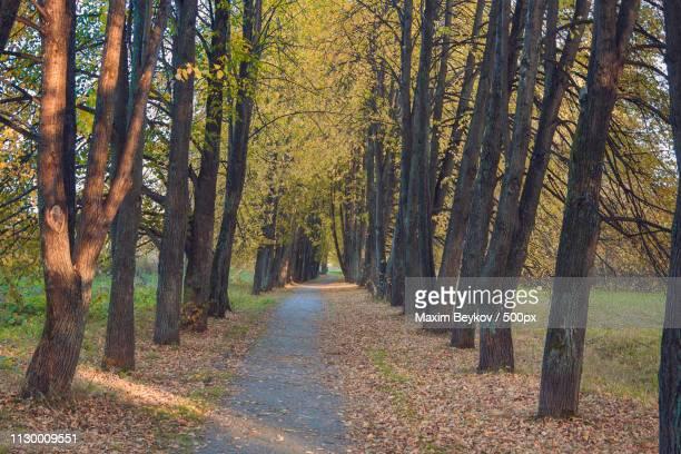walk in the woods - grove fotografías e imágenes de stock