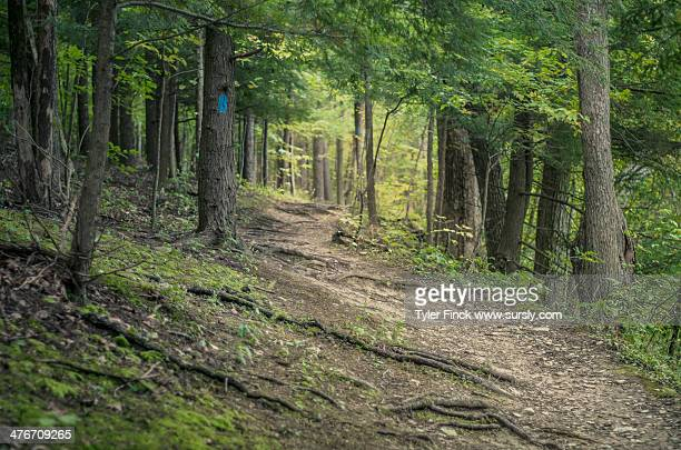 walk in the woods - sursly stock pictures, royalty-free photos & images