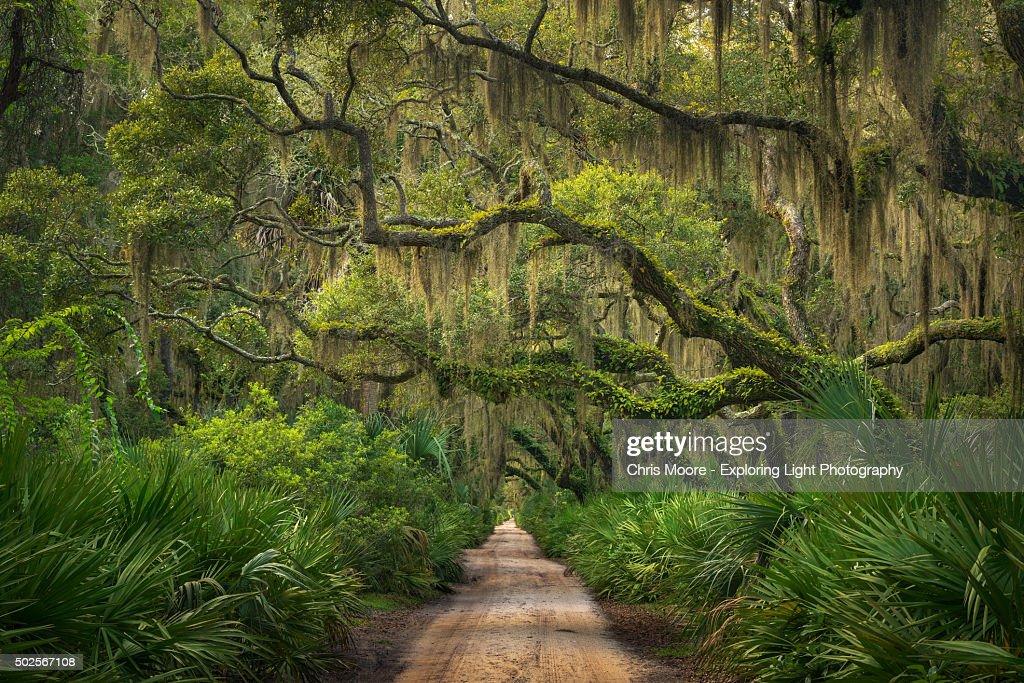 A Walk in the Woods : Foto de stock