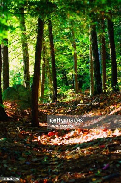 a walk in the woods - laura woods stock pictures, royalty-free photos & images