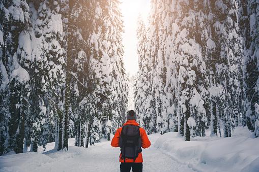 Walk in winter forest 1075571170