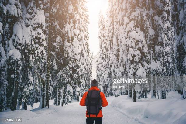 walk in winter forest - finland stock pictures, royalty-free photos & images
