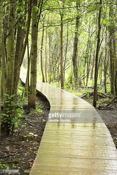 walk in woods - london ontario stock pictures, royalty-free photos & images