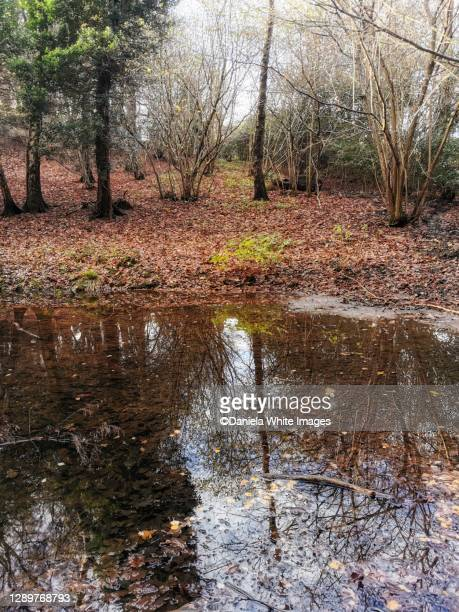 a walk on winter fold forest, surrey, england - surrey england stock pictures, royalty-free photos & images