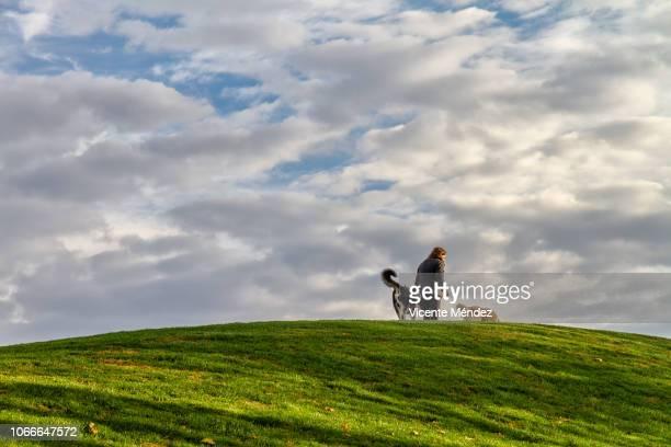 walk the dogs - vicente méndez fotografías e imágenes de stock