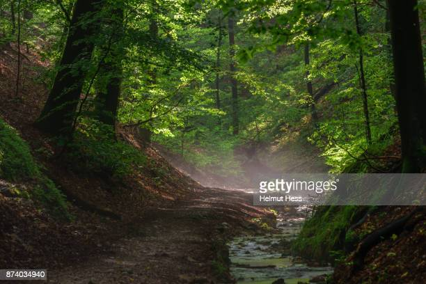 walk through the dragon gorge - drachenschlucht - アイゼナッハ ストックフォトと画像