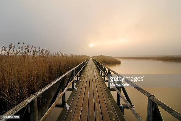 Walker at the pier of lake Federsee, Bad Buchau, Upper Swabia, Baden-Wuerttemberg, Germany