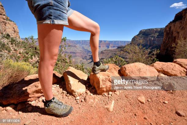 walker in the grand canyon - grand canyon village stock photos and pictures