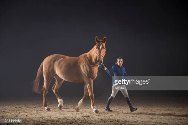 walking a horse - thoroughbred horse stock photos and pictures