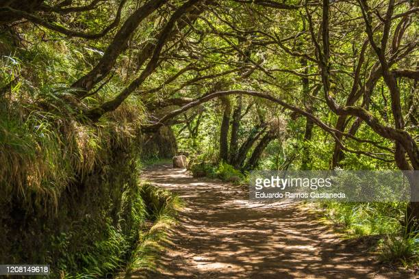 walking along a nature trail in a laurel forest crossed by a stream known as levada - madeira fotografías e imágenes de stock