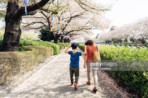 Walking along cherry blossom path